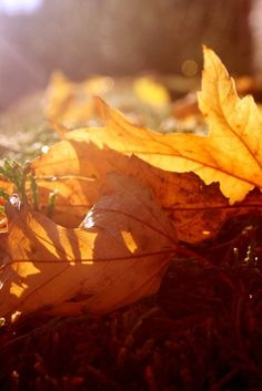 """~ Autumn ~ """"The air was fresh and crisp and had a distinct smell which was a mixture of the dried leaves on the ground and the smoke from the chimneys . . . """" ~ Arlene Stafford Wilson"""