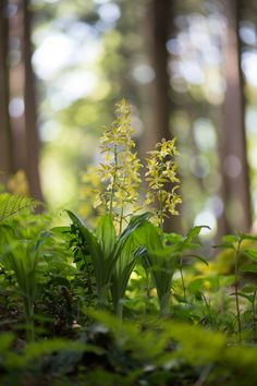 The Forest Floor Woodland Flowers, Woodland Forest, Woodland Garden, Dame Nature, Mystical Forest, Old Trees, Forest Floor, Nature Plants, Walk In The Woods