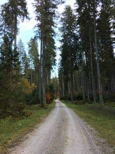 Herbst im steirischen Salzkammergut Bad Mitterndorf, Country Roads, Nature Pictures, Road Trip Destinations, Autumn