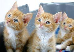 Imagen: El gato de jengibre (Ginger cat) (© Park Dale/Alamy)