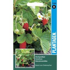 Wild Strawberries - Baron von Solemacher