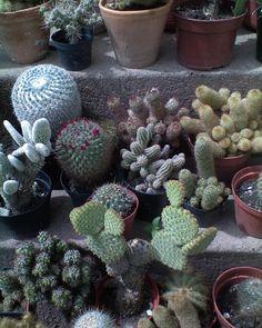 Kaktusz Succulents, Gardening, Plants, Projects, Inspiration, Biblical Inspiration, Succulent Plants, Lawn And Garden, Plant