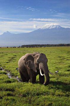 11. / Serengeti National Park, Tanzania / In het centrale deel van het 14.700 km grote nationale park Serengeti leven op de langgrassavannes vooral olifanten.