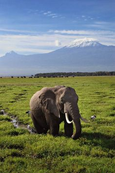 Serengeti National Park, Tanzania  ---  For more UNESCO World Heritage Sites http://www.ecstasycoffee.com/look-beautiful-unesco-world-heritage-sites/
