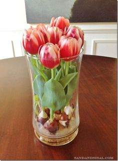 to Force Tulip Bulbs in Water - Sand and Sisal I think even I could grow tulips like this even though I don't have a green thumb at all!I think even I could grow tulips like this even though I don't have a green thumb at all! Indoor Garden, Garden Plants, Indoor Plants, Outdoor Gardens, Herb Garden, Hanging Air Plants, Indoor Flowers, Bulb Flowers, Easy Garden