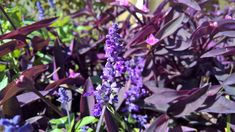 Lavender Flowers, Flower Photos, Trees To Plant, Most Beautiful, Flora, Herbs, Plants, Photography, Photograph