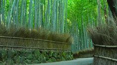 京都日和 〜 Kyoto Biyori ~ : 【動画】1 minute Kyoto #006 竹林の小径