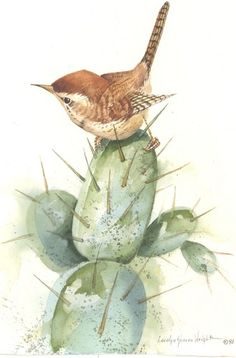 Cactus Wren 11x8 watercolor | CShoresInc - Painting on ArtFire
