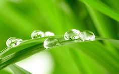 Fresh Green Grass wallpaper_other_health questions,pictures,fotos