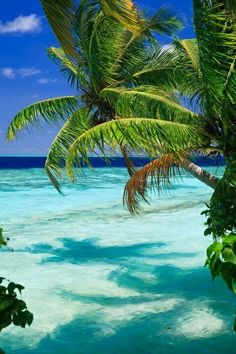 Science Discover Tropical Paradise At Maldives With Palms And Blue Sky Mural Murals Your Way Dream Vacations Vacation Spots Vacation Ideas Paradis Tropical Barbados Travel Murals Your Way Tropical Beaches Barbados Beaches Beach Scenes Dream Vacations, Vacation Spots, Vacation Ideas, Italy Vacation, Places To Travel, Places To See, Honeymoon Destinations, Honeymoon Spots, Barbados Travel