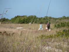 Walking the trail from the south end of the island. #honeymoon #island #florida
