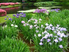 Garden at Emperor's palace, Tokyo