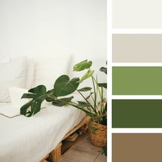 Are you looking for color palettes or color scheme? There are a number of color palletes. See it and enjoy your creative colors. Green Bedroom Colors, Bedroom Colour Palette, Green Colour Palette, Bedroom Color Schemes, Calm Colors For Bedroom, Bedroom Color Combination, Apartment Color Schemes, Green Color Schemes, Kitchen Colour Schemes
