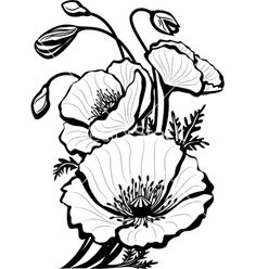 Sketch of poppy flowers vector by Wikki33 - Image #619895 ...