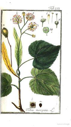 1779 - Icones plantarum medicinalium - by Zorn, Johannes, 1739-1799