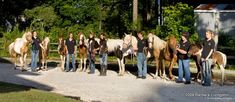 Misty's Heaven is an informational website about Misty of Chincoteague and her descendants. Beautiful Horses, Beautiful Babies, Chincoteague Ponies, Horse Books, Famous Movies, Thoroughbred, Descendants, Horse Racing, Gods Love
