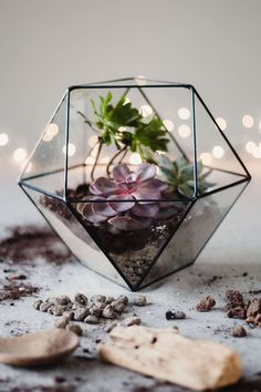 Large Glass Terrarium, Geometric Terrarium, Modern Table Centerpiece, Geometric Planter, Succulent T Large Glass Terrarium, Succulent Terrarium, Fairy Terrarium, Terrarium Containers, Glass Containers, Christmas Centerpieces, Table Centerpieces, Gift For Architect, How To Make Terrariums