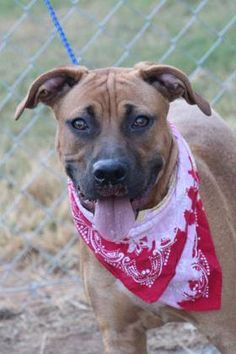 ADOPTED> NAME: Jennings  ANIMAL ID: 33710256  BREED: Boxer mix  SEX: male  EST. AGE: 1 yr  Est Weight: 53 lbs  Health: Heartworm neg  Temperament: dog friendly, people friendly  ADDITIONAL INFO: RESCUE PULL FEE: $35  Intake date: 10/11  Available: Now