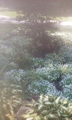 Silver Lake, Plants, Plant, Planets
