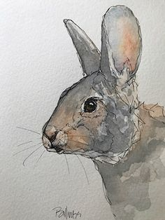 Rabbit study by Susanne Billings Ink & watercolor ~ 7 inches x 5 inches