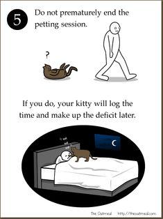 kitty revenge!
