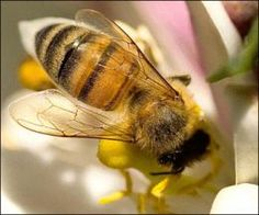 How NOT to Get Stung Tending your Bee Hives and Honeybees
