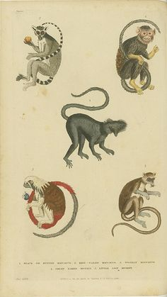 Various monkeys and lemurs   Flickr - Photo Sharing!