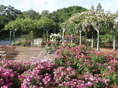 Harry P. Leu Gardens and other places to visit in Orlando on a budget.
