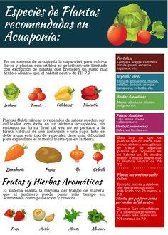 Especies de Plantas Recomendadas en Acuaponía. acuaponiaandina.co