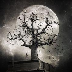 Original Fantasy Photography by Kasia Derwinska Dark Fantasy Art, Dark Art, Dark Drawings, Tree Tattoo Designs, Dragonfly Art, Fantasy Photography, Digital Photography, Moon Art, Conceptual Art