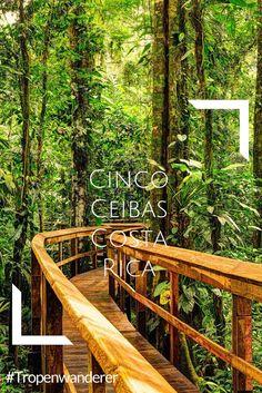 Wenn du auf der Suche nach Dschungel-Adventure bist, interessiert dich vielleicht die Cinco Ceibas. Erfahre hier mehr. #CostaRica #PuraVida #CincoCeibas #Abenteuer #Adventure #Sarapiqui #Reisen #Tropenwanderer