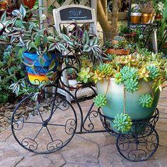 "871 curtidas, 16 comentários - @momluvssucculents no Instagram: ""TGIF! #succulents #wanderingjew"""