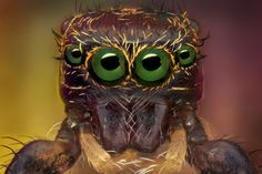 Beautifully Creepy Photos Show Spider Faces Up Close Caterpillar Insect, Spider Face, Microscopic Photography, Creepy Photos, Jumping Spider, Fotografia Macro, Beautiful Bugs, Creature Feature, Little Monsters