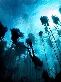 Underwater landscape. someday i'll get my scuba license...