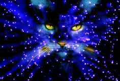 Blue sky cat with yellow eyes