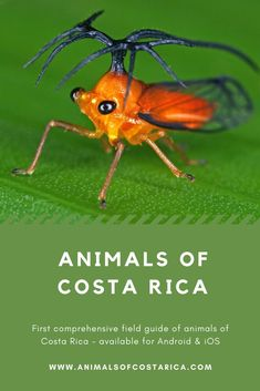 Animals of Costa Rica App Amphibians, Reptiles, Mammals, Marine Fish, Field Guide, Spiders, Costa Rica, Insects, Birds