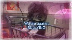 Today we are all standing against bullying including Layla as bullying is a form of abuse that can happen to our fur babies also, so we are asking everyone to join in with us and post a picture of your baby wearing purple - thank you  #stopbullying