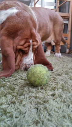 Where's the Ball ?