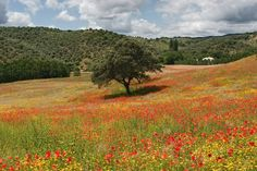 Landscape in Hornachuelos (Córdoba) Portugal, Natural Park, Tree Forest, Andalusia, Fantastic Art, Fields, Natural Beauty, Sierra, Spain