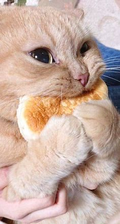 This cat and his bread - your daily dose of funny cats - cute kittens - pet memes - pets in clothes - kitty breeds - sweet animal pictures - perfect photos for cat moms Cute Baby Cats, Cute Little Animals, Cute Cats And Kittens, Cute Funny Animals, Kittens Cutest, Cute Dogs, Funny Cats, Cats Humor, Funny Horses