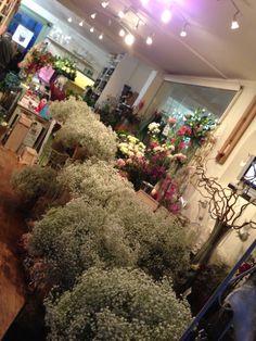 Gyp Pom poms wedding Lv Wedding Pom Poms, My Flower, Flowers, Plants, Shop, Wedding Poms, Plant, Royal Icing Flowers, Flower