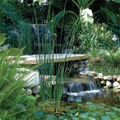 Would love to have a pond with a waterfall