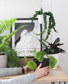 WIN worth of PLANTS! Our giveaway with is now LIVE! is showcasing the freshest SA decor for your home as part of their Abode Giveaway series. Head over to to check it out and to enter. Hanging Plants, Indoor Plants, Style Urban, Living Vintage, Shelfie, Home Look, Houseplants, Giveaway, Plant Leaves