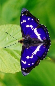 Types Of Butterflies, Beautiful Butterflies, Beautiful Birds, Butterfly Kisses, Butterfly Art, Butterfly Wallpaper, Nature Wallpaper, Spirit Animal Totem, Butterfly Pictures
