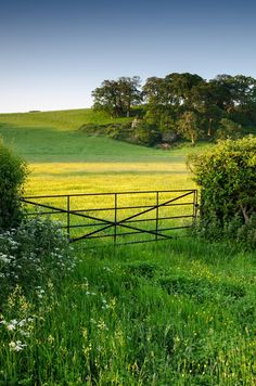 Not a special scene, no stand out subjects - just a gate, field full of buttercups and the low sun giving that special early morning light that picks out the flowers, grasses and undulations in the landscape.  I really like it - brings back the silence (yes, even next to the A39!) that an early morning shoot brings this time of year - after sunrise at Watchet with Jay, we stopped off at Dunster before heading to the only establishment open this early on Sunday in Minehead (any guesses…