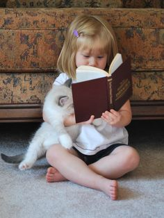 Reading a story to a Ragdoll Cat (a large, long haired, blue eyed, pointed breed of cat).