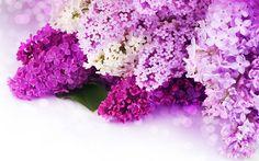 Purple Flower Wallpapers Desktop Background