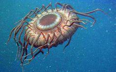 fullredneck.com / Dans les Profondeurs des Mers ! Wouaaaa ! Personne ne sait ce que c'est !