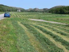 Fine jordbruksområder på Vikna