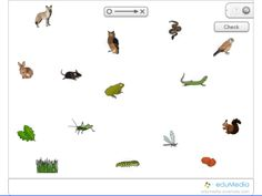 Food chain | School-Science | Pinterest | Science, Food chains and ...